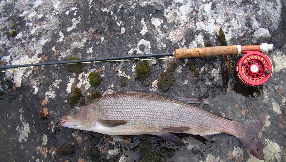 Suéde 2005, rivière Kaïtum